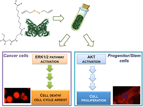 Schematic illustration of BAD-NE preparation and its effects on cancer and adult progenitor stem cells.