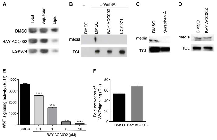Inhibition of ACC Decreases Lipidation, Secretion and Signaling of WNT3A.
