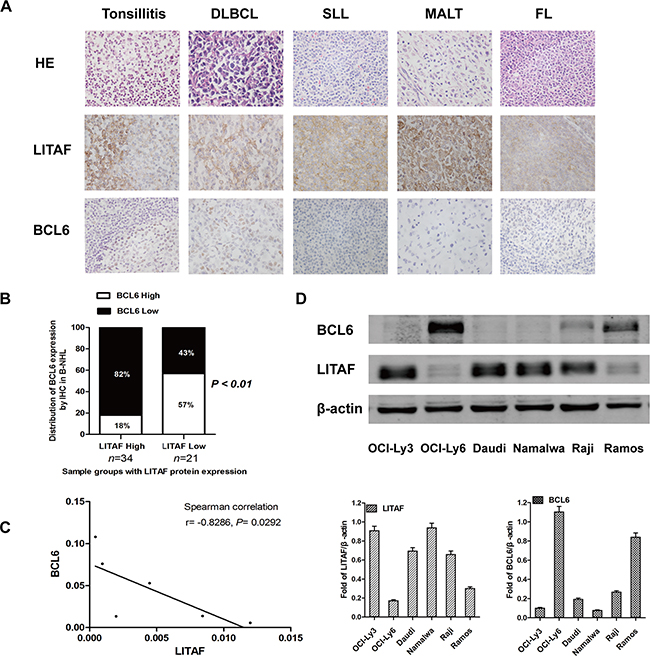 LITAF inversely correlates with BCL6 in B-NHL.