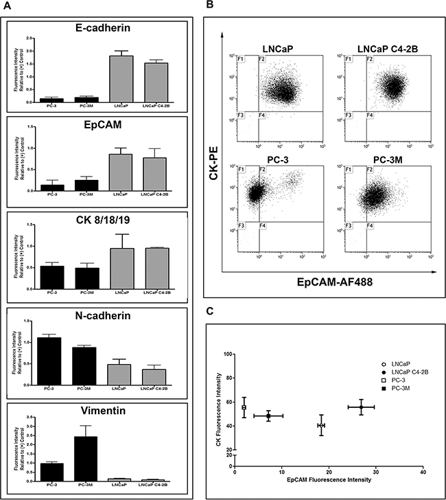 Human prostate cancer cell lines display differences in EMT phenotype.