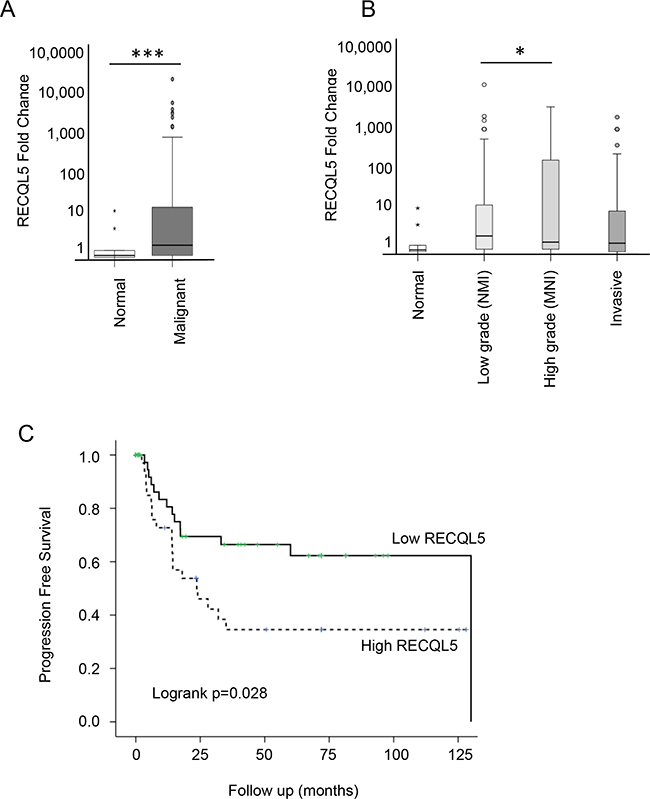 RECQL5 mRNA is increased in UCC and is associated with poor prognosis.