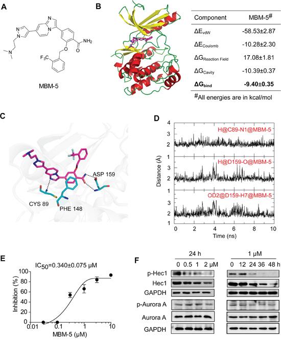 MBM-5 inhibits NEK2 kinase activity.