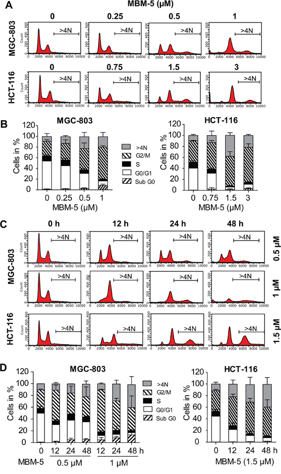 MBM-5 causes accumulation of cells with ≥4N DNA content.