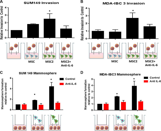 Crosstalk between educated MSCs and IBC cells increases IBC invasion and self-renewal through IL-6.