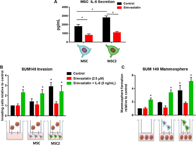 Simvastatin blocks IL-6 secretion and inhibits the effects of M2 educated MSCs on IBC invasion and self-renewal.