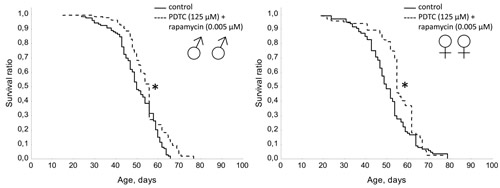 Effect of combined use of PDTC (125 µМ) and rapamycin (0.005 µМ) on lifespan Drosophila melanogaster.