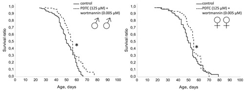Effect of combined use of PDTC (125 µМ) and wortmannin (0.005 µМ) on lifespan Drosophila melanogaster.
