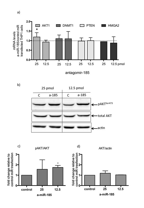 Inhibition of miR-185 in THP-1 cells treated with PMA, results in AKT activation.