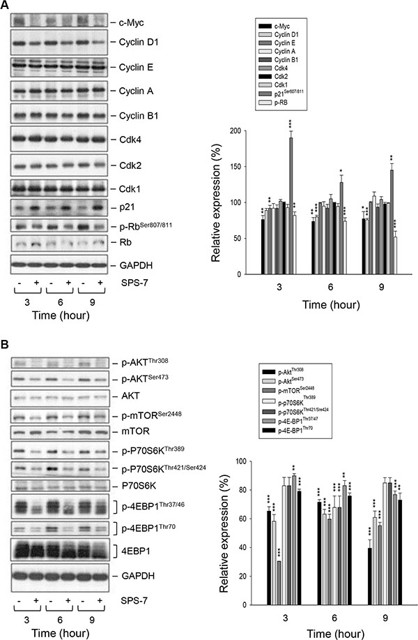 SPS-7 induces changes of expression levels of several proteins.