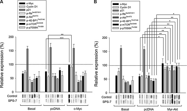 c-Myc and Akt involve in SPS-7-induced signaling pathways.