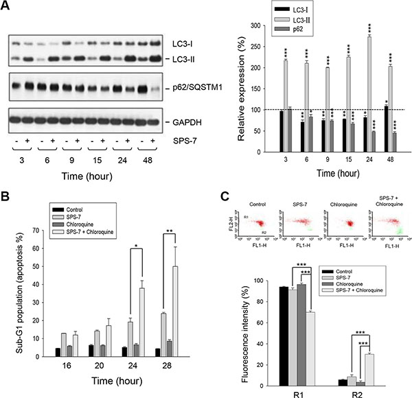 SPS-7 induces autophagy which counteracts apoptotic cell death.