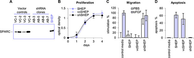 Inhibition of SPARC expression with shRNA.