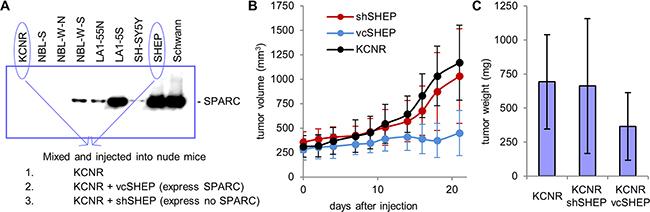 Experimental model of stroma-rich neuroblastoma.