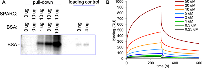 Analysis of SPARC/albumin interaction.