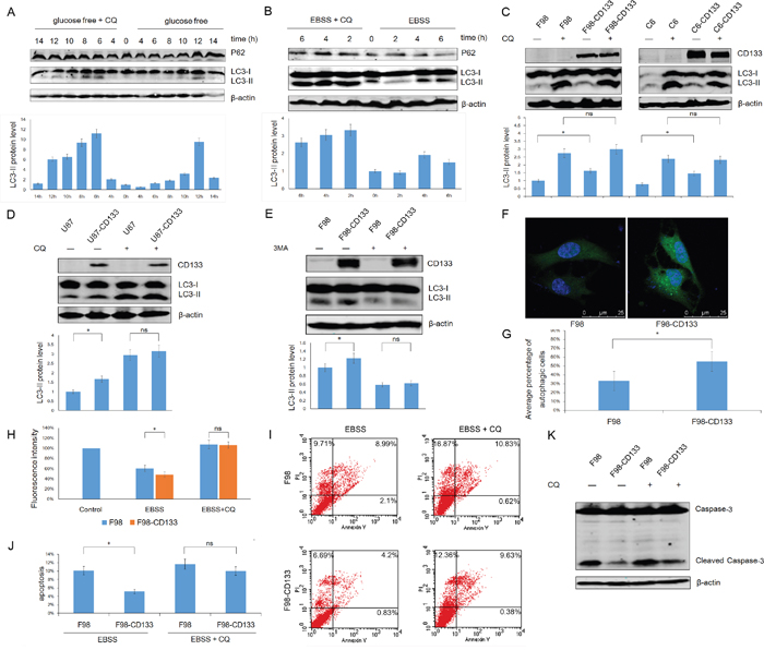 Autophagy confers on CD133+ cells the tolerance to stress microenvironment.