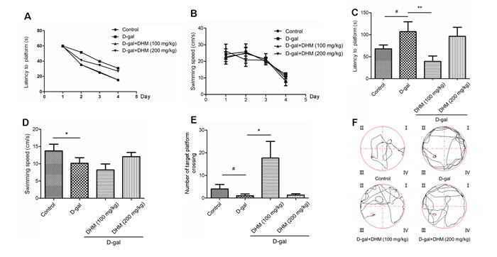 Changes in learning and memory capacity in rats administrated normal control group, D-gal group, D-gal + DHM (100 mg/kg) group, D-gal + DHM (200 mg/kg) group assessed by morris water maze (MWM) (