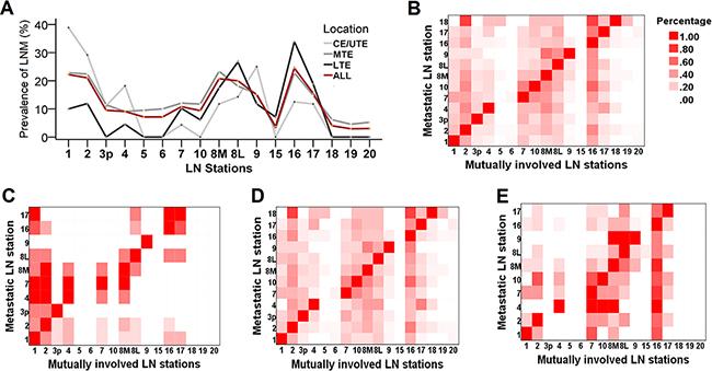The pattern of lymph node metastasis (LNM) in regional nodal stations.