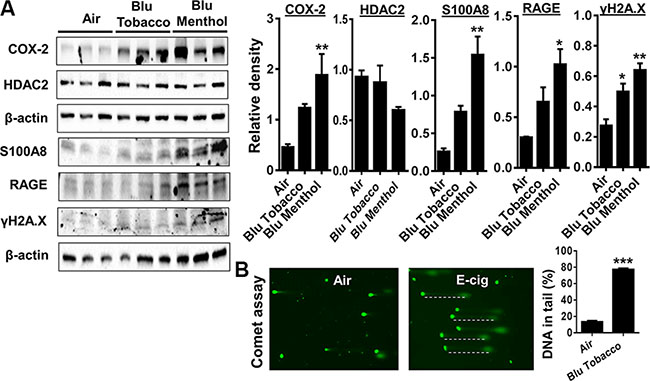 E-cig vapor exposure caused inflammatory responses and DNA damage in human periodontal ligament fibroblasts (HPdLFs).
