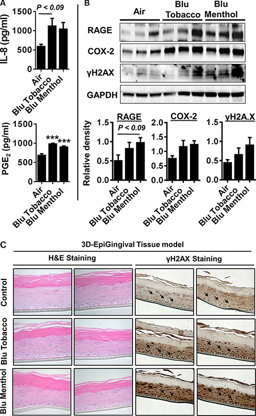 E-cig vapor caused inflammatory responses and DNA damage in normal human 3D in vitro model of EpiGingival tissues.