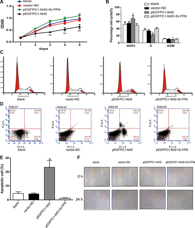 Nrf2 affects the viability, cell cycle, apoptosis and migration of PC3 cells.