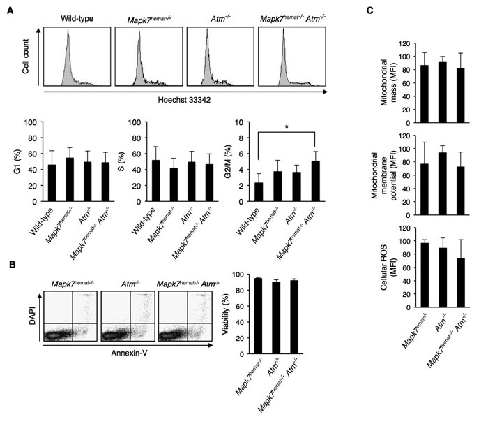 Increased G2/M cell cycle phase accumulation in DN thymocytes of