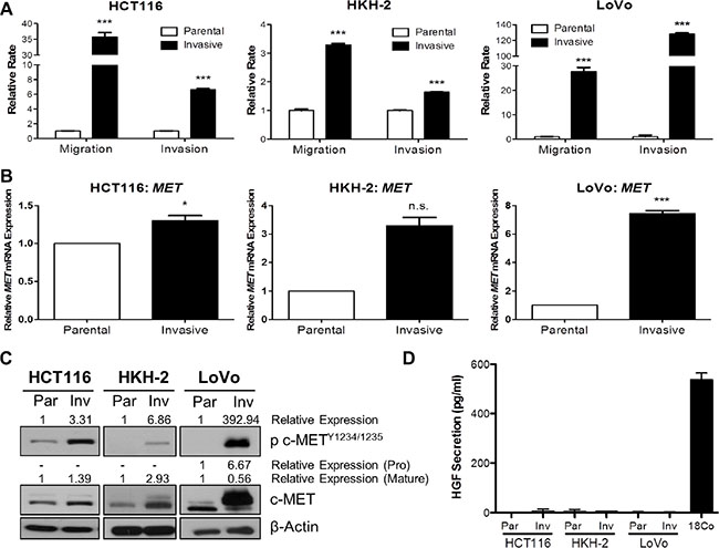 c-MET protein and mRNA levels are highly upregulated in invasive CRC daughter cell lines.
