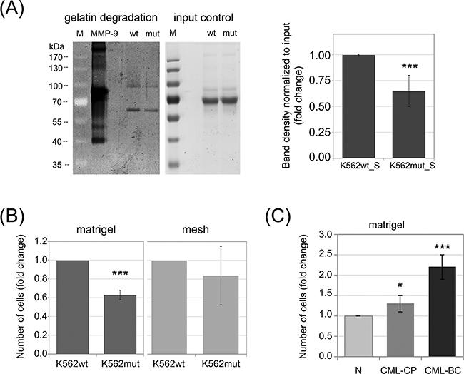 Impact of phosphorylation of eIF2α in leukemia cells on their invasive properties.
