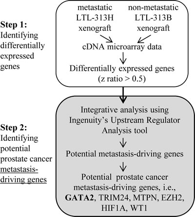 Two-step strategy used in identifying potential metastasis-driving genes in prostate cancer.