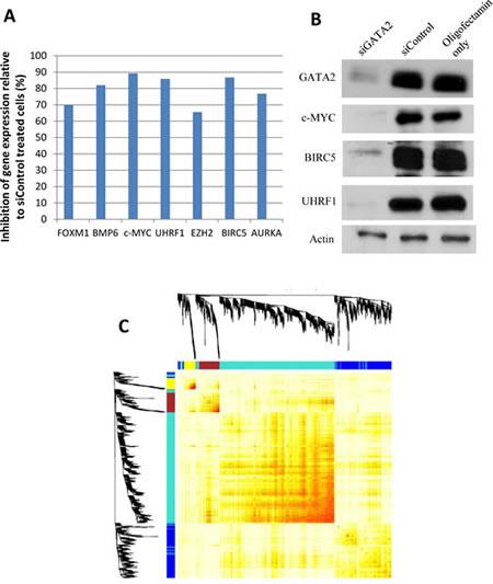 Microarray gene expression data.