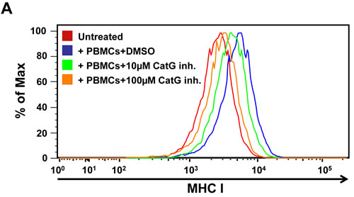 Functional assay for CatG-mediated enhancement of cell surface MHC I molecules.