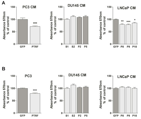 Effect of PTRF expression in prostate cancer cells on endothelial cell viability.