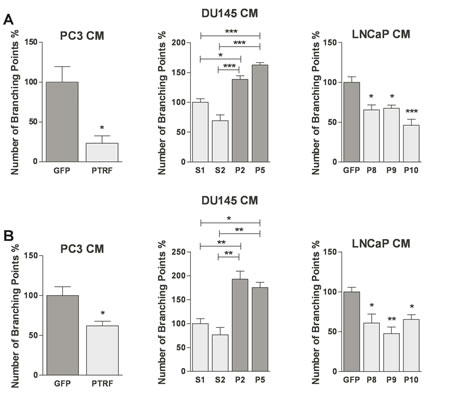 Effect of PTRF expression in prostate cancer cells on