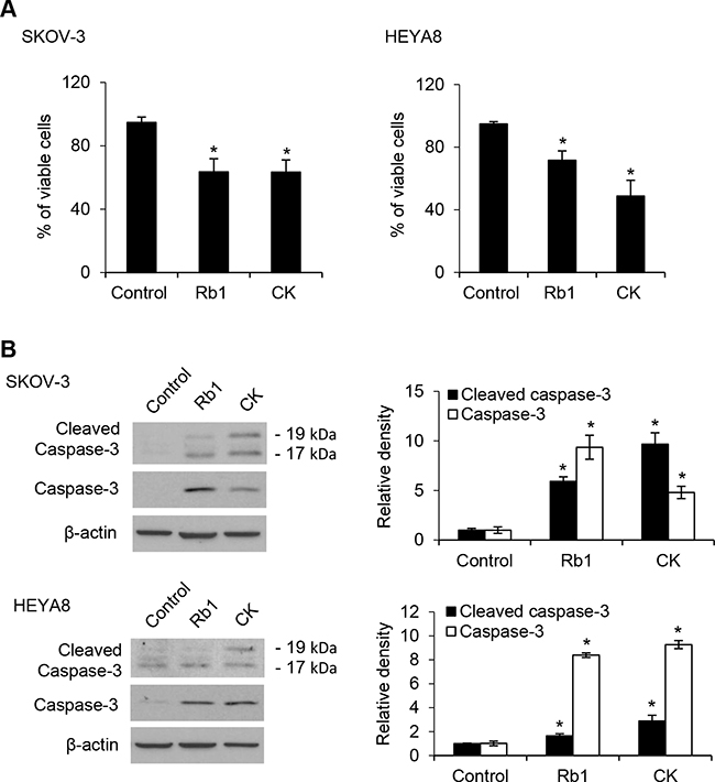 Rb1 and its metabolite compound K induce apoptosis of CSCs.