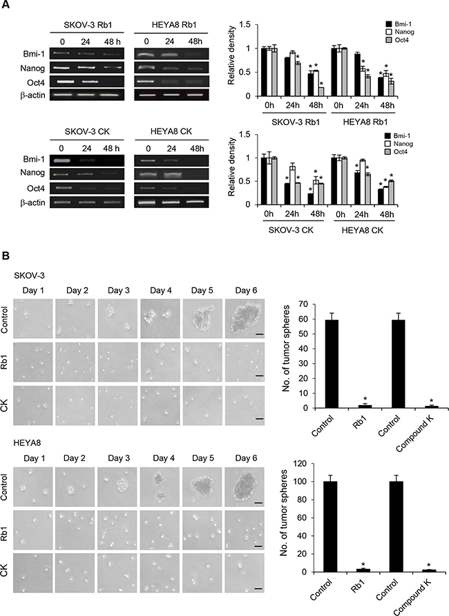 No regrowth/relapse in Rb1- or compound K-treated SKOV-3 and HEYA8 spheroids.