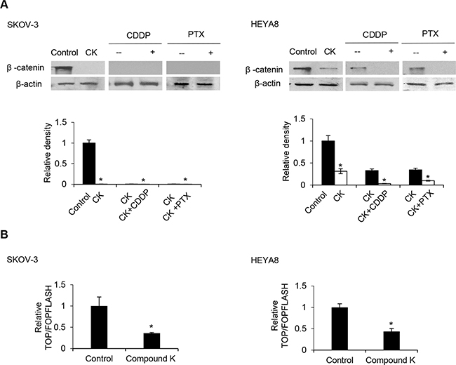 Compound K enhances the chemosensitizing effect through the β-catenin/TCF signaling pathway.