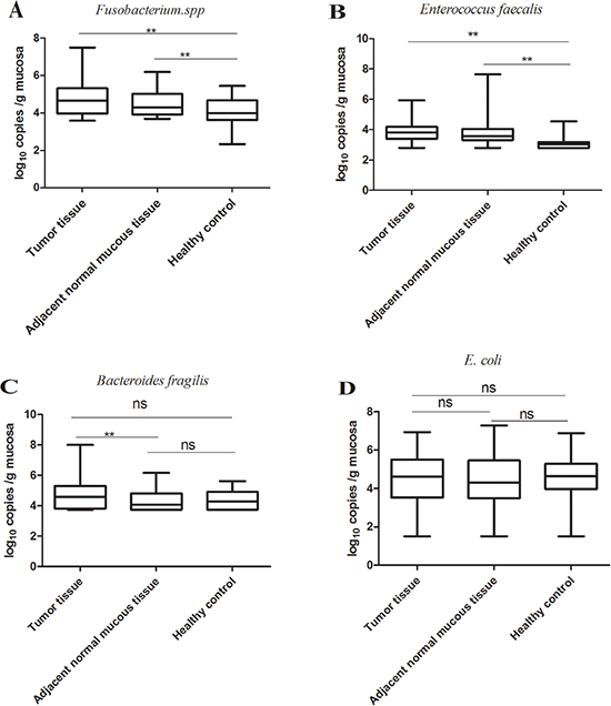 Quantification of bacteria in tumor tissues, adjacent normal mucous tissues of CRC patients and control tissues from age- and gender-matched healthy volunteers.