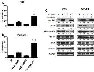 (A-B) PC3 cells and PC3-AR cells were treated with indicated concentrations of panobinostat and/or BEZ235 for 48 hours.