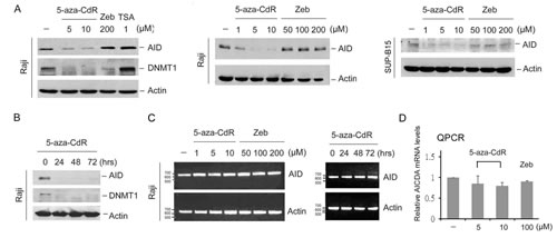 5-aza-CdR downregulated AID.