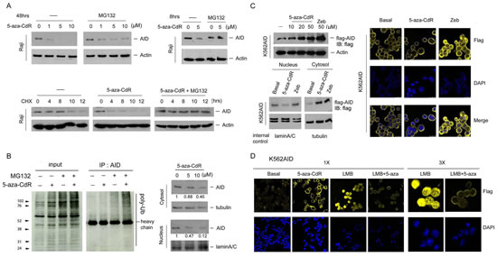 5-aza-CdR reduced the protein stability of nuclear AID.