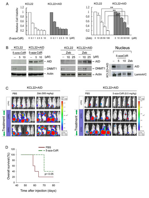 The anti-cancer effect of DNMT inhibitors on tumor-engrafted mice.