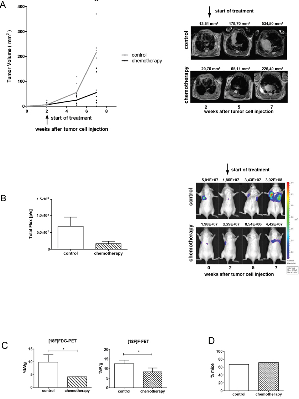 Chemotherapy reduces the growth of the primary tumor, but does not affect metastasis formation.