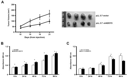 Suppression of tumor growth and cell proliferation.