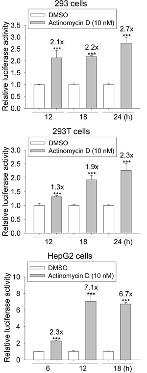 Induction of the transcriptional activity of p53 response element (p53RE) by actinomycin D (ActD) treatment.