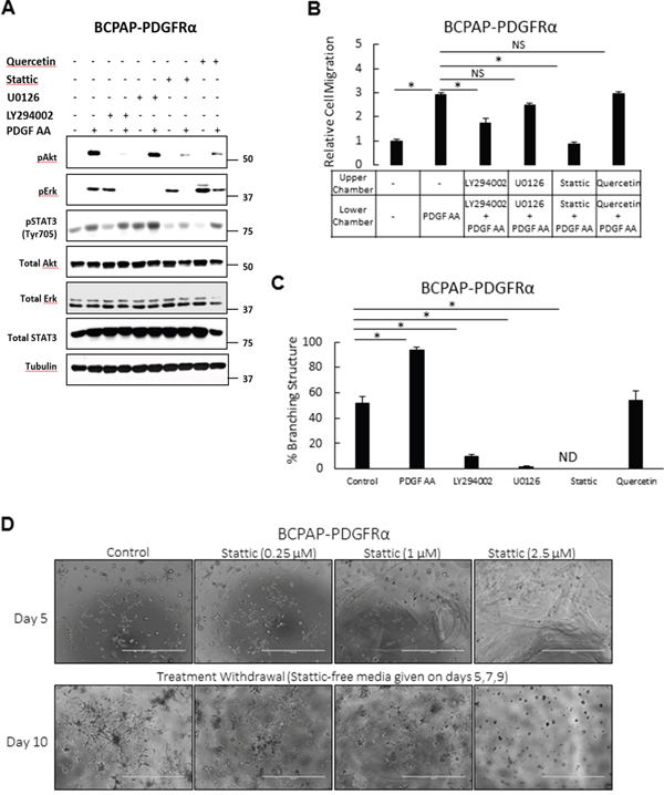 Effects of inhibiting signaling pathways on the PDGFRα-associated phenotypes.