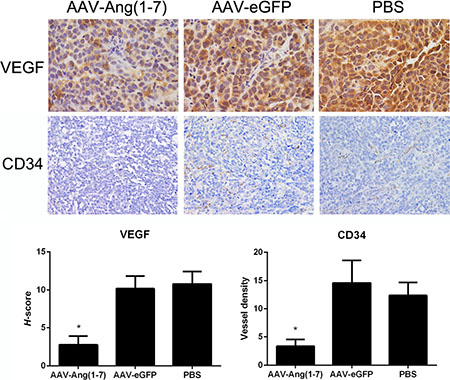 Effect of Ang-(1-7) on angiogenic factors and vessel density in lung tumor xenografts.