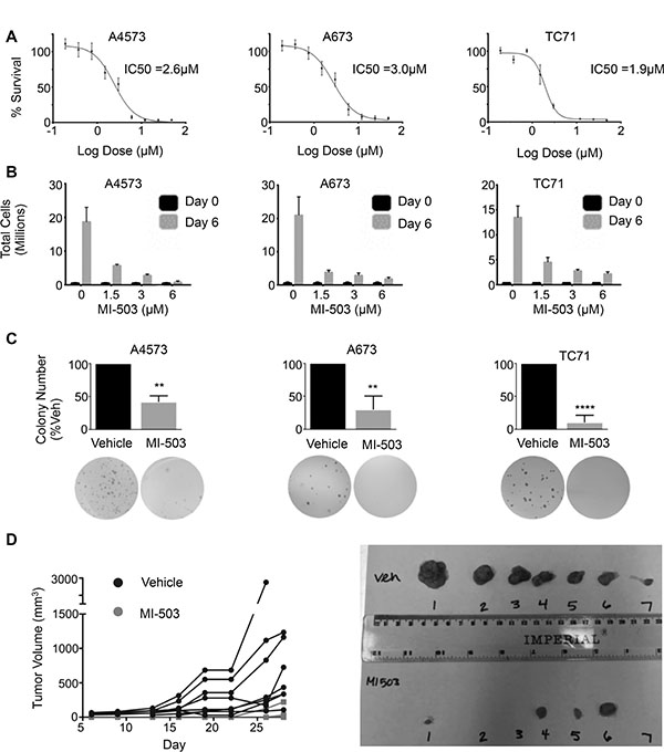 MI-503 inhibits Ewing sarcoma cell expansion and tumorigenicity.