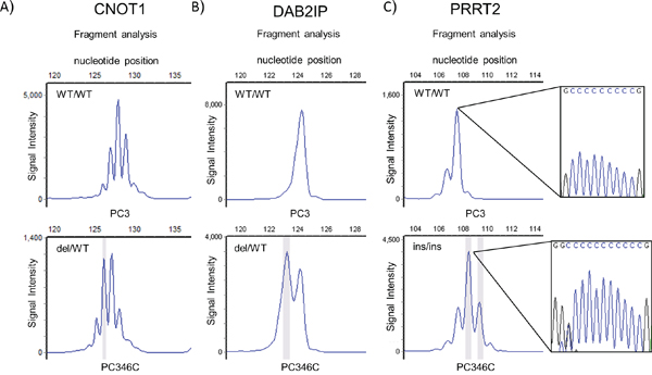 MNR repeat analysis of top mutated genes in prostate cancer in genomic DNA from prostate cancer cell lines PC346C (MMR deficient) and PC3 (MMR proficient).