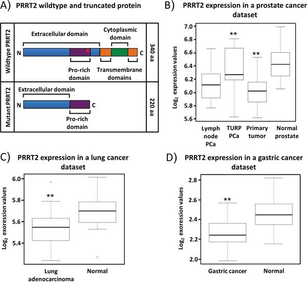 Expression pattern of PRRT2 mRNA.
