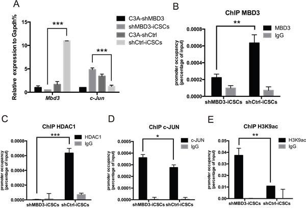 MBD3/NuRD inhibits c-Jun transcription.