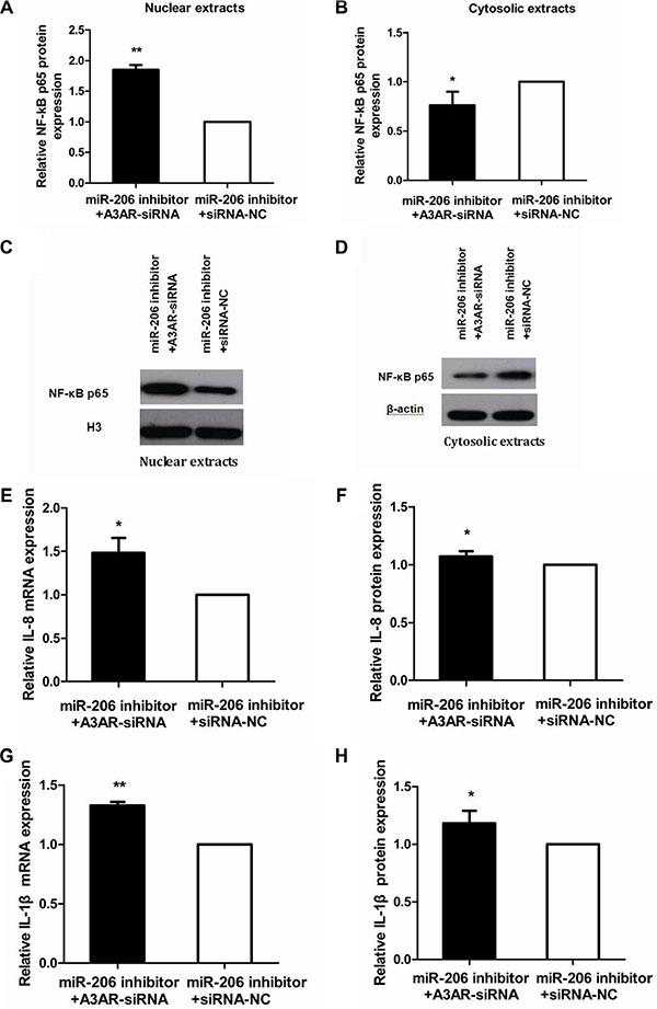Reversal of miR-206-inhibitory effect by A3AR-siRNA.